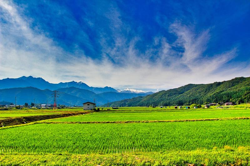 信州安曇野の田園風景